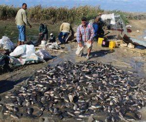 المزارع السمكية تبوح بأسرارها وتُعطى أكثر من 75% من إنتاج مصر