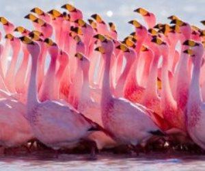 سر ظهو طيور الفلامنجو الوردي في اليونان