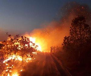 لماذا يحرق علماء «بيئة بالبرازيل» غابات الأمازون عمدا؟ .. السبب كارثي