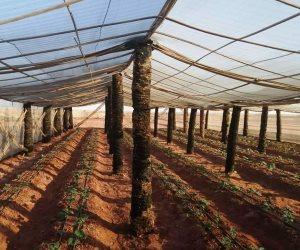 2020 عام البشائر.. الزراعة تسرع وتيرة العمل فى مشروع الـ 1.5 مليون فدان وبث الحياة لـ51 مزرعة إنتاج حيوانى