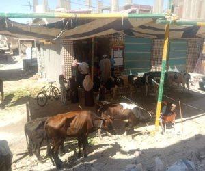 بـ 85 للعجالي و100 للأغنام.. مبادرة لخفض أسعار اللحوم في بئر العبد بشمال سيناء (صور)