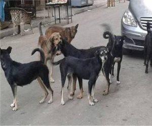 ما أصل الكلاب وكيف انتشرت حول العالم؟.. دراسة تجيب