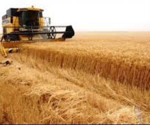 7000 نبات تركهم الإنسان من أجل عيون الثلاثي.. القمح والذرة والأرز الأكثر قربا للمعدة