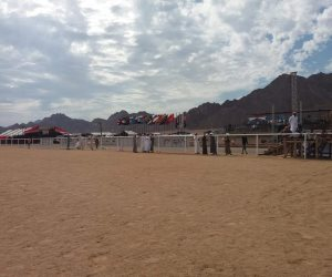 تفاصيل إجراءات تجهيز الإبل قبل خوض السباق.. ومهام لجنة تحكيم سباقات الهجن (صور)