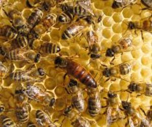 في مهرجان العسل المصري.. غياب واختفاء النحل يثير القلق