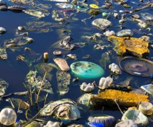 ارحموا النيل من التلوث.. حملة أممية لإزالة المخلفات في الدقي والزمالك