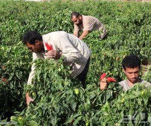 أزمة بين وزارة الري وصغار المزارعين بعد رفع القيمة الإيجارية لأراضيها عشرات الأضعاف