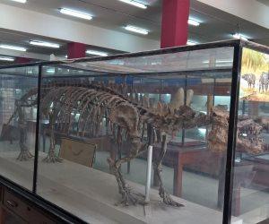 118 عاما على افتتاح المتحف الجيولوجي.. «تربة القمر» تزينه وجمجمة «ديناصور الفيوم» تلفت الأنظار