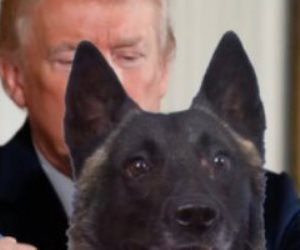 الرئيس الأمريكي يكرم كلب «عملية البغدادي» بطريقة خاصة.. وقلادة تكريمًا لدوره