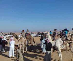 بمشاركة 8 قبائل و85 مطية ..نادي سيناء للهجن والفروسية يقيم سباقه الثاني بوسط سيناء (صور)