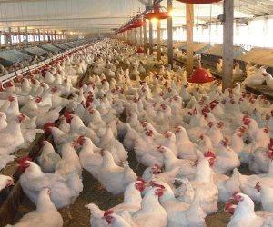بركات 2020.. هل يحمل الدجاج فيروساً قاتلاً أشد فتكاً بالبشر؟