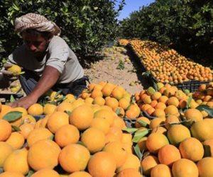 بلغت أكثر من 4.8 مليون طن.. الصادرات الزراعية المصرية تواصل قفزاتها