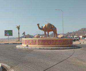 بمشاركة 700 مطية ورعاية إماراتية.. بدء سباق الهجن الثاني على مضمار شرم الشيخ (صور)