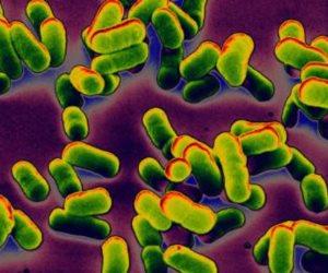 اعرف بكتيريا الأمعاء وكيف ترتبط بالأمراض في س وج