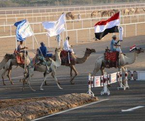 شرم الشيخ عاصمة سباقات الهجن المصرية.. استضافت أقوى المنافسات في فترة قليلة