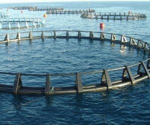 مصر تكتفي ذاتيا من الإنتاج السمكي قريبا.. والإنتاج مليون و900 ألف طن سنويا