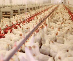 استقرار أسعار الدواجن والبيض واللحوم اليوم الأحد 29-3-2020
