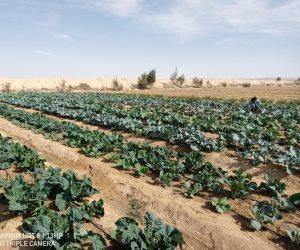 تنمية سيناء قطار لا يتوقف.. إنتاج الفواكه والخضروات في 11 تجمعا زراعيا بوسط الفيروز