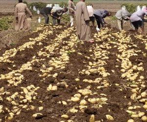 البرنامج الوطني لإنتاج تقاوي الخضر يدخل التاريخ.. والبداية بإنتاج البطاطس