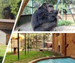 بعرض مفتوح للنمر المفترس.. حديقة الحيوان تحتفل بعيد الميلاد المجيد (صور)