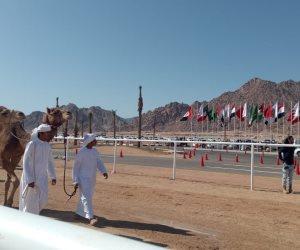 تعرف على إجراءات تحكيم سباقات الهجن بمهرجان شرم الشيخ التراثي الدولي (صور)
