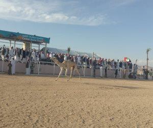 ننشر نتائج سباقات الفترة المسائية لفعاليات ثان أيام مهرجان شرم الشيخ للهجن (صور)
