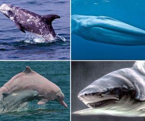 13 نوعا من الدلافين تسكن مصر.. البحر الأحمر يحتضن كائنات نادرة تصل لـ 44 سلاسلة