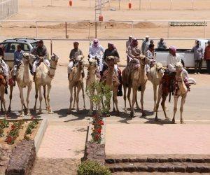 """""""المصري للهجن"""" يعلن قرارات وشروط جديدة للمشاركة بالمهرجان الرابع بشرم الشيخ"""