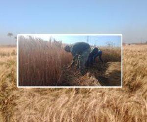 تم تخصيص خط ساخن للشكاوى.. «الزراعة» تستمر في صرف الأسمدة المدعمة