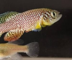 ضبط أسماك مهدد بالانقراض محظورة الصيد محنطة بشرم الشيخ