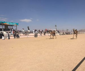 مهرجان شرم الشيخ للهجن يستهل سباقات يومه الثاني بـ 3 أشواط محافظات وماراثون (صور)
