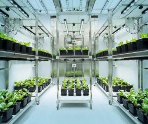 ارتفاع المبيعات العالمية لمبيدات الأعشاب والحشرات من 25 إلى 60 مليار دولار في 13 عاما