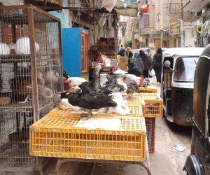 ذبح الطيور خارج المجازر.. قنبلة موقوتة في مركز السادات بالمنوفية