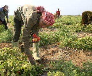 بزيادة تبلغ 100 مليون.. 665 مليون جنيه لدعم المزارعين بالموازنة الجديدة