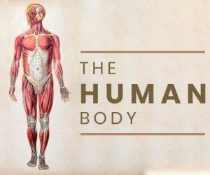 حقائق عن التشريح والتركيب الكيميائي لجسم الانسان.. تعرف عليها