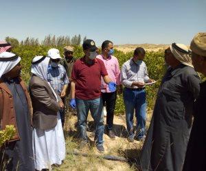 مشروعات تنموية وخدمية جديدة بوسط سيناء (صور)