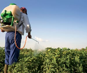 مافيا المبيدات المضروبة.. هل تفيد حملات الزراعة في إيقاف الكارثة؟