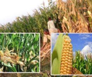 لتلبية احتياجات صناعة الدواجن ومنع الاستيراد.. «الزراعة» تضع خطة لزيادة المحاصيل الصيفية
