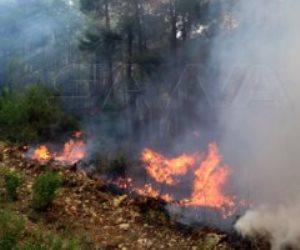 تسببت في خسائر كبيرة.. حرائق الغابات تضرب سوريا ولبنان وإسرائيل (فيديو)