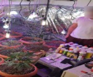 """""""الكيف يلزمه براح"""".. مصري يزرع الماريجوانا داخل منزله بالبحر الأحمر"""
