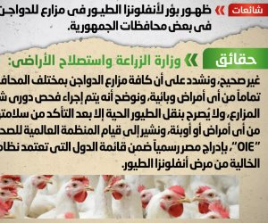 الحكومة تنفي ظهور بؤر لأنفلونزا الطيور بمزارع الدواجن