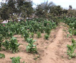 مصرع تاجر مخدرات في مداهمة أمنية لمزرعة أفيون بأسيوط