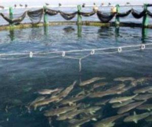 الأرقام ترد على المشككين.. زيادة الإنتاج السمكي 38% والمزارع تستحوذ على النصيب الأكبر بـ1.6 مليون طن