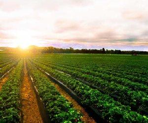 بعد تحقيق الاكتفاء الذاتي.. كيف ساهمت حياة كريمة في تطوير منظومة الزراعة؟