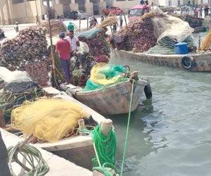 افتتاح موسم صيد الأسماك ببحيرة البردويل في شمال سيناء (صور)