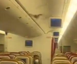 أثار رعب الركاب.. «خلاص» خفاش يغير مسار طائرة هندية ويضطرها للهبوط