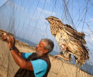 يبدأ اول سبتمبر.. موسم صيد السمان والشرشير بشمال سيناء بشرة خير للأهالي وباب رزق للصيادين