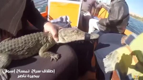 لحظة إطلاق سراح تمساح جزيرة النباتات في بحيرة ناصر (فيديو)